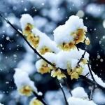 傲雪凌霜3.2